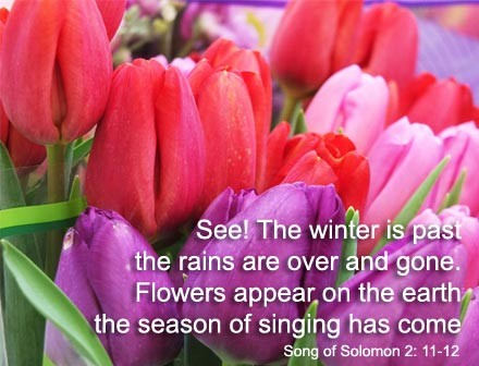 Spring Song of Solomon